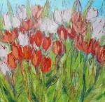 Červené a bílé květy tulipánů/Red and white tulips