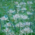 Bílé lekníny / White water lilies