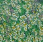Květy luk a strání ( kopretiny a kohoutky) / Ox-eye daisy