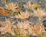 Lekníny kvetou